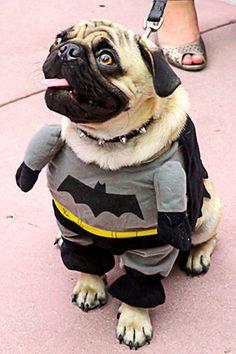 Top 15 des animaux déguisés en super-héros #Topito