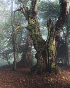wanderthewood:  bybobbimac