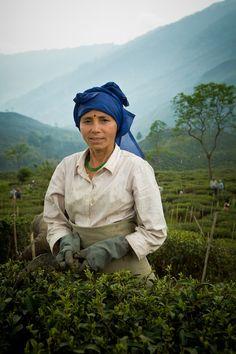 By Gavin Gough: Darjeeling Tea Worker