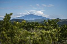 Ventoux again…but now from another perspective, from the Rasteau vinery. After some sweet grapes,and before some dry red wine.... :) photo by Baráth Mix Levente