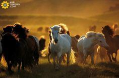 #ABRUZZO  terra rimasta ancora per certi aspetti libera e selvaggia, in cui si possono incontrare moltissimi animali da fotografare. Per visitarla, se avete bisogno di un pernottamento ci trovate QUI http://www.agriturismo.com/agriturismi/abruzzo #agriturismo   #italia   #italy   #animali   #liberi   #selvaggi   #natura   #free   #freedom   #horse