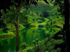 Nuwara Eliya, Sri Lanka (dinusha123, via Flickr)