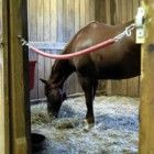 The Top 5 Ways to Keep Mud Under Control in Your Horse's Pens -(simple gate for inside barn)