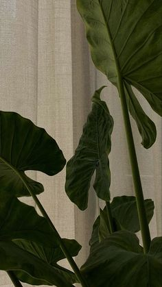 Classy Aesthetic, Aesthetic Photo, Aesthetic Art, Aesthetic Pictures, Plant Aesthetic, Flower Aesthetic, Aesthetic Desktop Wallpaper, Aesthetic Backgrounds, Pastel Wallpaper