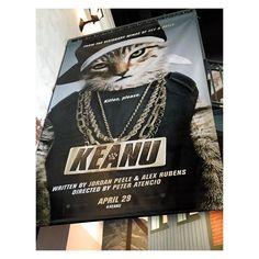 Um...what is going on? #keanu #catstakingovertheworld
