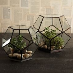 octagonal glass boxes