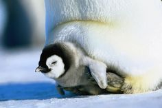 antarctica wildlife | To see the gallery in all its glory, you'll need to enable Javascript.