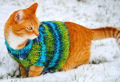 sweater-wearing hunter!