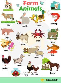 Image result for Farm and Domestic Animals Vocabulary