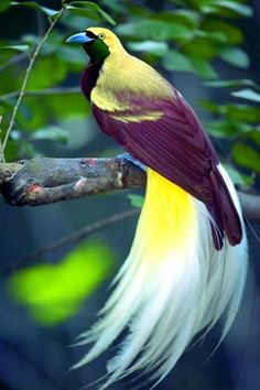 I've always thought these were the most beautiful birds since I first saw them in pictures - bird of paradise