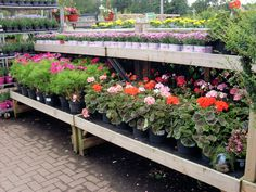Add a bit of colour this summer at Longacres!