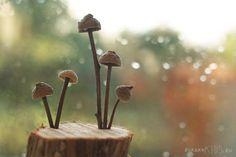 Schwammerl-Deko für den #Herbst – WE LIKE!