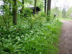 Im Teutoburger Wald