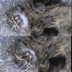Con tutta la #pioggia che è venuta oggi la temperatura è un pò più fresca... e qualcuno sembra apprezzare molto ;-)   Dolci Sogni a-mici !  #Buonanotte anche da parte di #Tony ♡    #Goodnight #Sleeptime #sleep #catsofinstagram #cats #instacat #cutecats #sweetcats #lovelovelove #lovecat @animals_captures #animal_captures #cats #pets #animals #photooftheday #ilovemycat #nature #catoftheday #lovecats   #catsmylove #gatti #ioamoglianimali #MIAO :-)