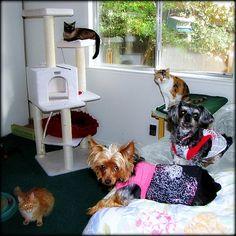 cats dogs bella lilbuddy rumtumtugger araresight missstevie misstruffles