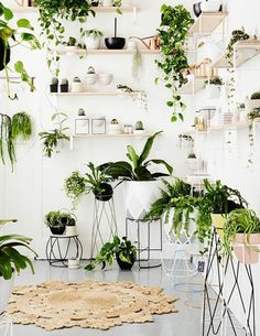 Plants—Indoor, Outdoor, Flowering|6 Great Ways To Decorate With Plants|Source:thespruce.com|-I found this article to be packed full of information about how to decorate your home with plants. I pinned this because nearly every idea is a good one and I didn't want to forget any of them.