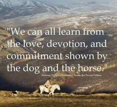 Very true. We humans could learn a lot just by looking at dogs and horses. Both are so loyal.