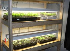 Indoor Seed Starting Rack - How to build an inexpensive seed starting rack to grow all of your vegetable and flower plants this year from seed