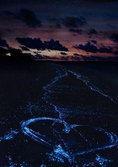 Sea of Stars, Vaadhoo, Raa Atoll, Maldives #SeaofStars #Vaadhoo RaaAtoll #Maldives