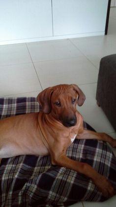 Onze nieuwe  hond :Yiera