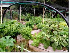 Arts Factory Backpackers - Photo Update - The Permaculture Research Institute
