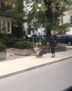 Oh Boy, We're Walking! Funny Animal Videos, Cute Funny Animals, Funny Animal Pictures, Cute Baby Animals, Animal Memes, Funny Cute, Funny Dogs, Animals And Pets, Hilarious