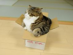 """What? No, this box fits me perfectly.""how I feel when I put on my jeans just after they've been on the dryer"
