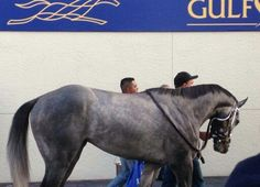 His body is so fit and built with a lot of muscle I love it!!  | Mohaymen