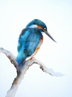 A limited edition print of a kingfisher painted by watercolour artist Jane Davies Watercolor Painting Techniques, Watercolor Projects, Watercolor Bird, Watercolor Animals, Watercolour Painting, Watercolours, Jane Davies, Foto Art, Traditional Paintings