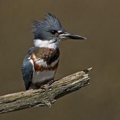 mooi ... een vogel!!!