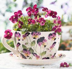 flowers in my cup of tea