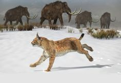 Reconstruction of the Iberian lynx that lived in the Iberian Peninsula 1.6 million years ago. / José Antonio Peñas (Sinc)