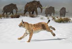 Reconstruction of the Iberian lynx that lived in the Iberian Peninsula 1.6 million years ago. / José Antonio Peñas (Sinc)