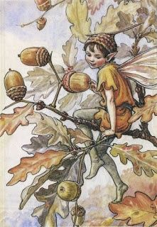 witches and acorns | Woodland Fairies Drawings
