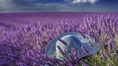 Скачать обои лето, лаванды, шляпа, раздел природа в разрешении 1366x768