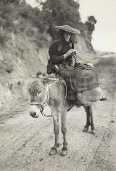 Ajaccio, Corsica. The woman, seated on donkey, is not wasting her transit time.  Bettmann/CORBIS