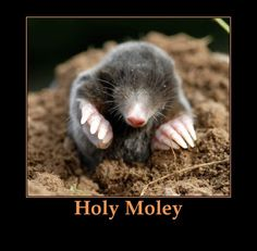 funny funny jokes | Funny Quotes, Jokes and One Liners About Moles | e-Forwards.com ...