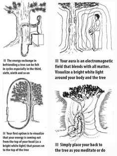 Taoist Masters observed that trees are tremendously powerful plants. Not only can they absorb carbon dioxide and transform it into oxygen, but they can also absorb negate forces and transform them into good energy. Wiccan Spells, Magick, Witchcraft, Pagan, Les Chakras, Mudras, Psychic Development, Spirit Science, Book Of Shadows