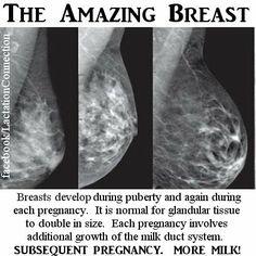 Breasts full of milk
