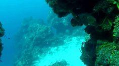 Amazing World of Cozumel Scuba Diving Palancar Gardens