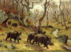 Resultado de imagen de pittore naturaliste Boar Hunting, Hunting Art, Hunting Drawings, Musk Ox, Hunting Pictures, Wild Boar, Outdoor Art, Wildlife Art, Nature Scenes