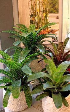 Bromelia Tropical Floral Arrangements, Tropical Plants, Faux Plants, Indoor Plants, Exotic Flowers, Beautiful Flowers, Ferns Garden, Small Garden Design, Shade Plants