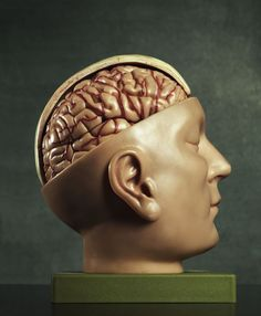 anatomical human head