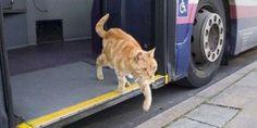 Γάτος παίρνει κάθε μέρα το λεωφορείο για να κάνει βόλτα! (Βίντεο)
