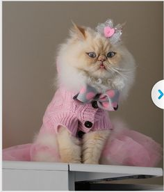Fuffy cat