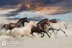Bildresultat för tavlor hästar