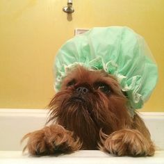 Make sure you protect your 'do in the bath. | 29 Style Lessons From Instagram's Most Fashionable Puppies