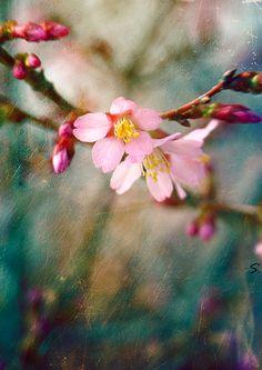 #FlowerShop #anthropologie  spring floral inspiration