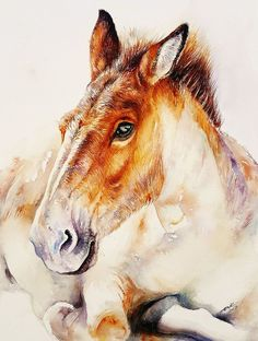 Buy Bailey the Donkey, Watercolor by Arti Chauhan on Artfinder. Discover thousands of other original paintings, prints, sculptures and photography from independent artists.