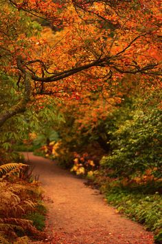 ~~Autumn in Northumberland • Fall path, Belsay Gardens, United Kingdom • by newcastlemale~~